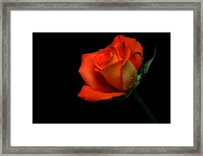 Orangette Framed Print