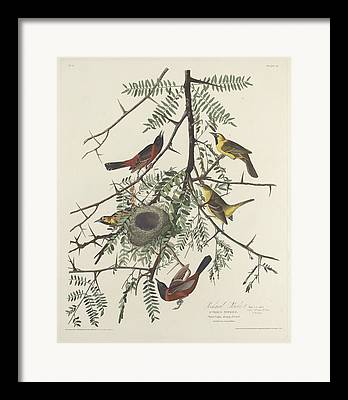 Wild Orchards Drawings Framed Prints