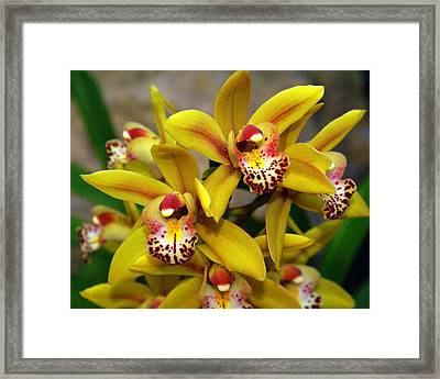 Orchid 9 Framed Print