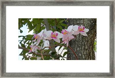 Orchid Bunch Framed Print by Maria Bonnier-Perez