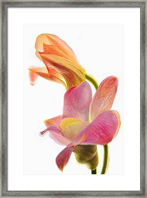 Orchid Morphing II Framed Print by Leda Robertson
