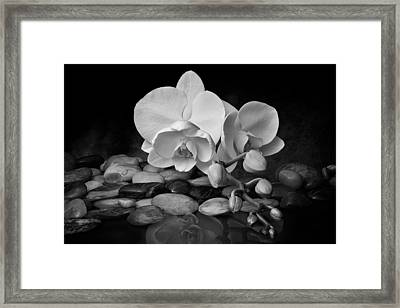 Orchid - Sensuous Virtue Framed Print