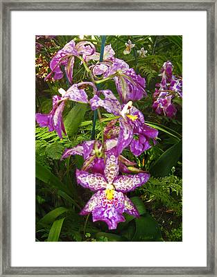 Orchids - Purple Polka Dots Framed Print