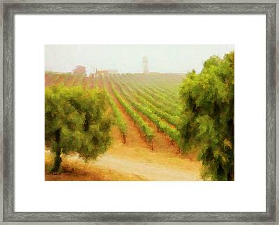 Orcutt Vineyard Framed Print by Patricia Stalter