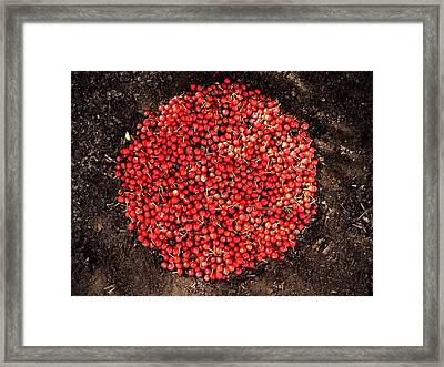Organize Red Berries Framed Print by Lizzie  Johnson