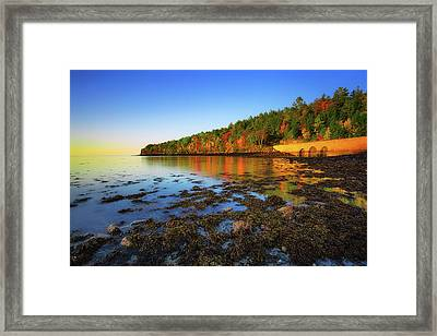 Otter Cove Framed Print by Robert Clifford