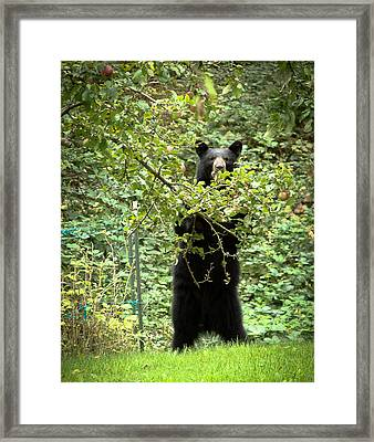 Our Bear Loves Apples Framed Print