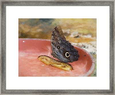Framed Print featuring the photograph Owl Butterfly 2 by Paul Gulliver