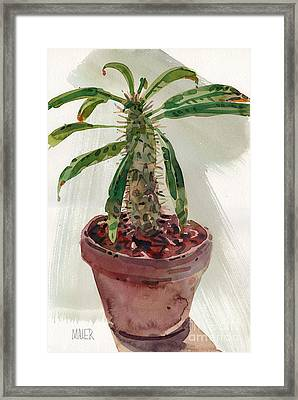 Pachypodium Framed Print by Donald Maier
