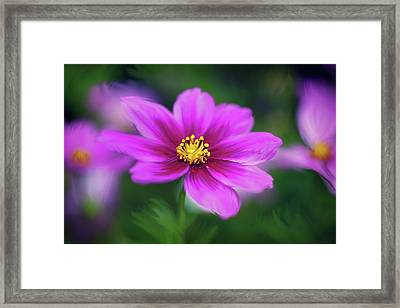 Painted Daisy Framed Print by June Marie Sobrito