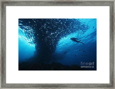 Palau, Diving Framed Print by Dave Fleetham - Printscapes