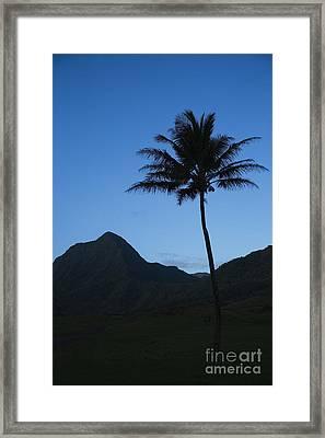 Palm And Blue Sky Framed Print by Dana Edmunds - Printscapes