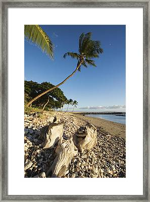 Palm And Driftwood Framed Print