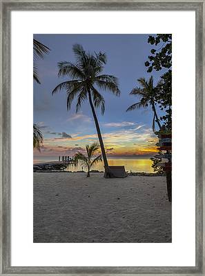 Palm At Sunset Framed Print by Al Hurley