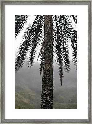 Palm, Koolau Trail, Oahu Framed Print