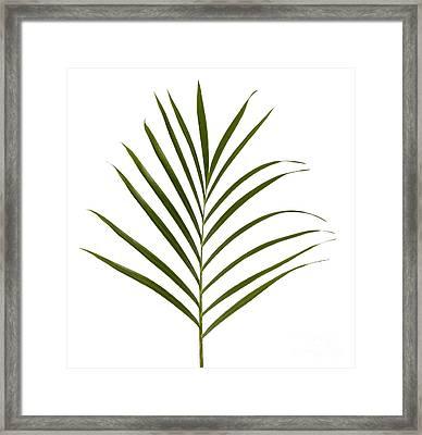 Palm Leaf Framed Print by Tony Cordoza