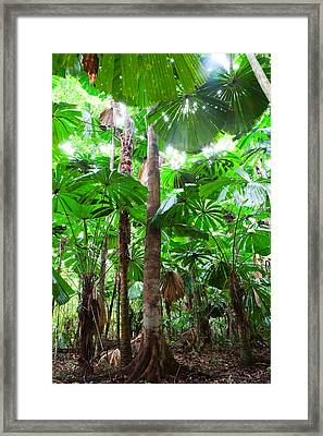 Palm Tree Forest Canopy Framed Print by Dirk Ercken