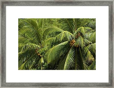 Palm Trees Framed Print by Vanessa Devolder