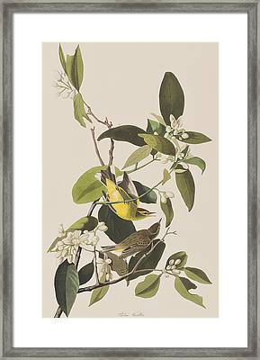 Palm Warbler Framed Print by John James Audubon