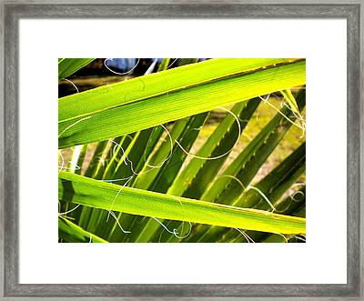 Framed Print featuring the painting Palmetto 3 by Renate Nadi Wesley