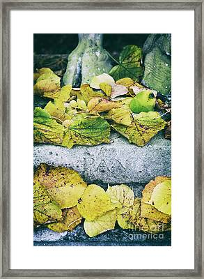 Pan Framed Print by Tim Gainey