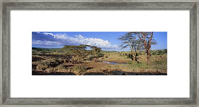 Panoramic View Of African Elephants Framed Print