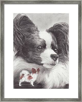 Papillon Framed Print by Laurie McGinley