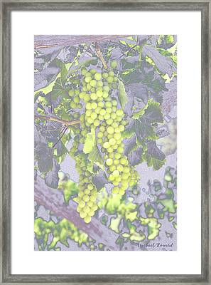 Pastel Grapes  Framed Print by Mikehoward Photography
