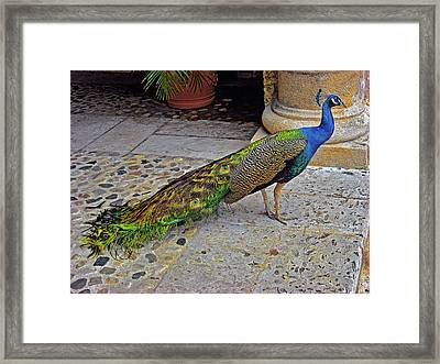 Peacock. Framed Print by Andy Za