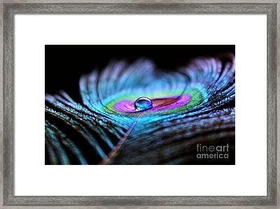 Peacock Flair Framed Print