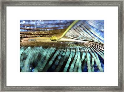 Peacock Gold Framed Print by Krissy Katsimbras