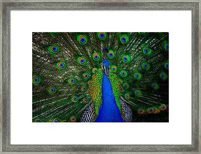 Framed Print featuring the photograph Peacock by Harry Spitz