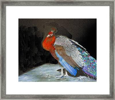 Peacock II Framed Print by Chuck Kugler