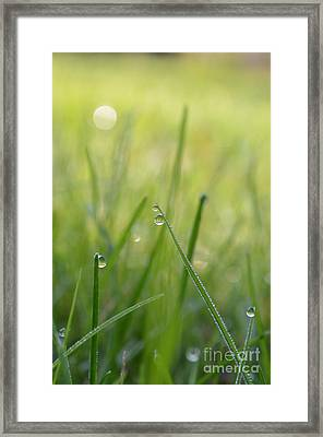 Pearls Of Heaven 6 Framed Print by Eva Maria Nova