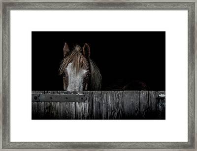 Peek A Boo Framed Print by Paul Neville