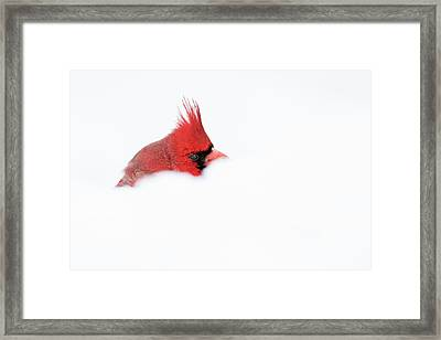 Framed Print featuring the photograph Peekaboo by Mircea Costina Photography