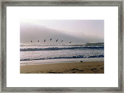 Pelican Brief Framed Print by Brande Barrett