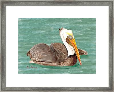 Pelican Floating Framed Print by Anne Beverley-Stamps
