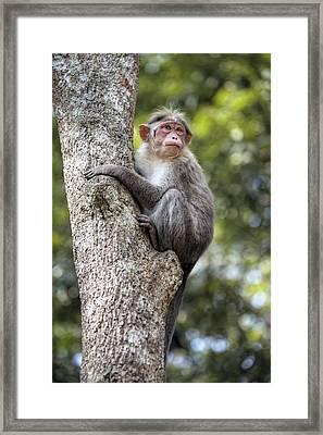 Periyar National Park - India Framed Print