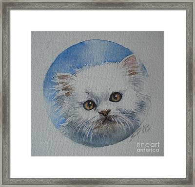 Persian Kitten Framed Print