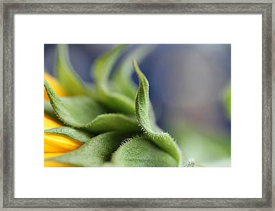 Persuasion  Framed Print by Connie Handscomb