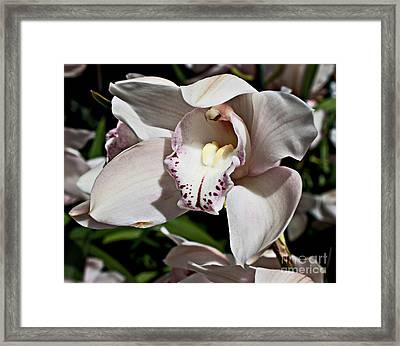 Petals Framed Print by Robert Sander