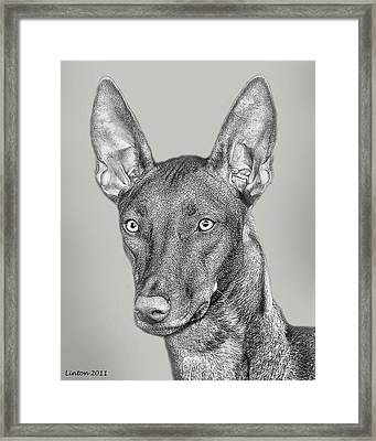 Pharaoh Hound Framed Print by Larry Linton