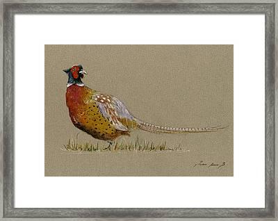 Pheasant Bird Art Framed Print