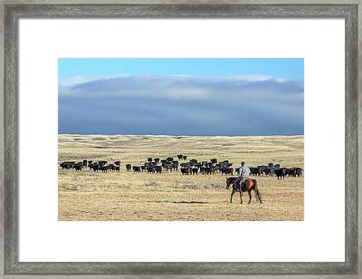 Driving The Herd Framed Print