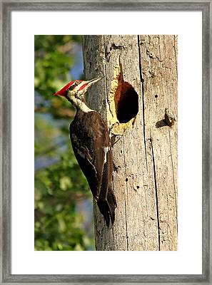 Pileated #26 Framed Print by James F Towne