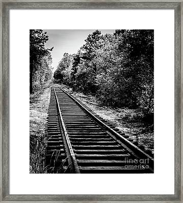 Pine Barren Rails Framed Print by Anthony Tucci