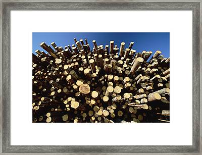 Pine Pinus Sp Logs Drying Framed Print