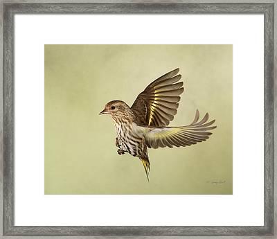 Pine Siskin In Flight Framed Print