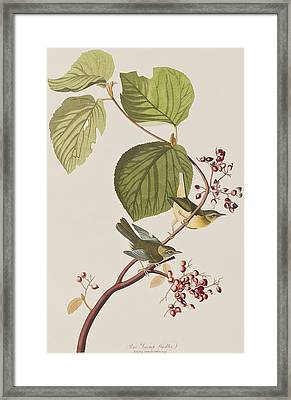Pine Swamp Warbler Framed Print by John James Audubon